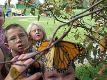 Students looking at butterfly